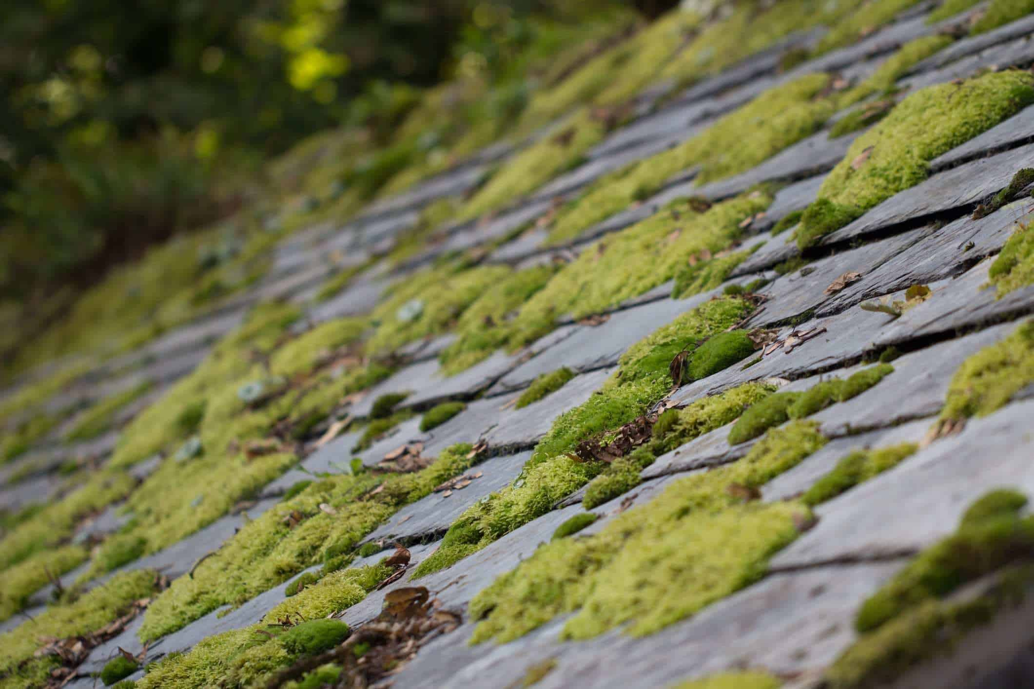 """Featured image for """"Moss and Algae are not your Roof's Friend"""""""