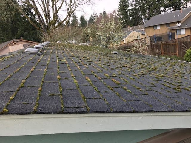 """Featured image for """"Roof Cleaning in Tacoma"""""""