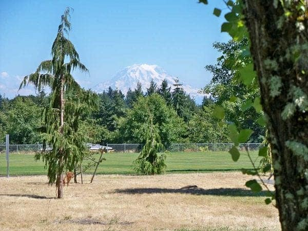 View of mount rainier from a distance with trees a grassy field and chain fence in the foreground.